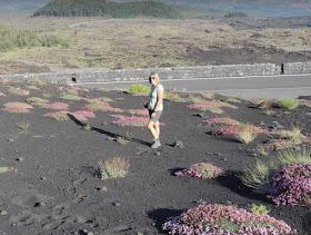 fiorellini che crescono accanto ai crateri silvestri
