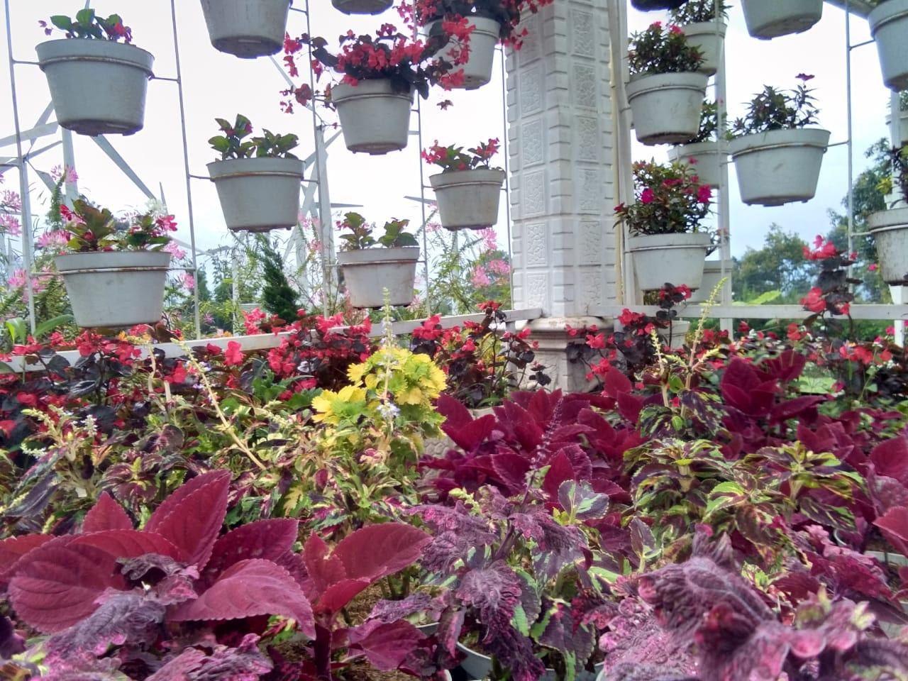 Taman Bunga Celosia