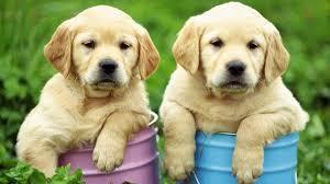 soñar-con-perros-que-numero-jugar-en-la-loteria