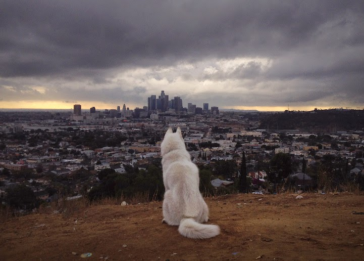 Lincoln Heights, Los Angeles, California - He Toured America's Pristine Wilderness…And He Took His Human Along For The Ride.