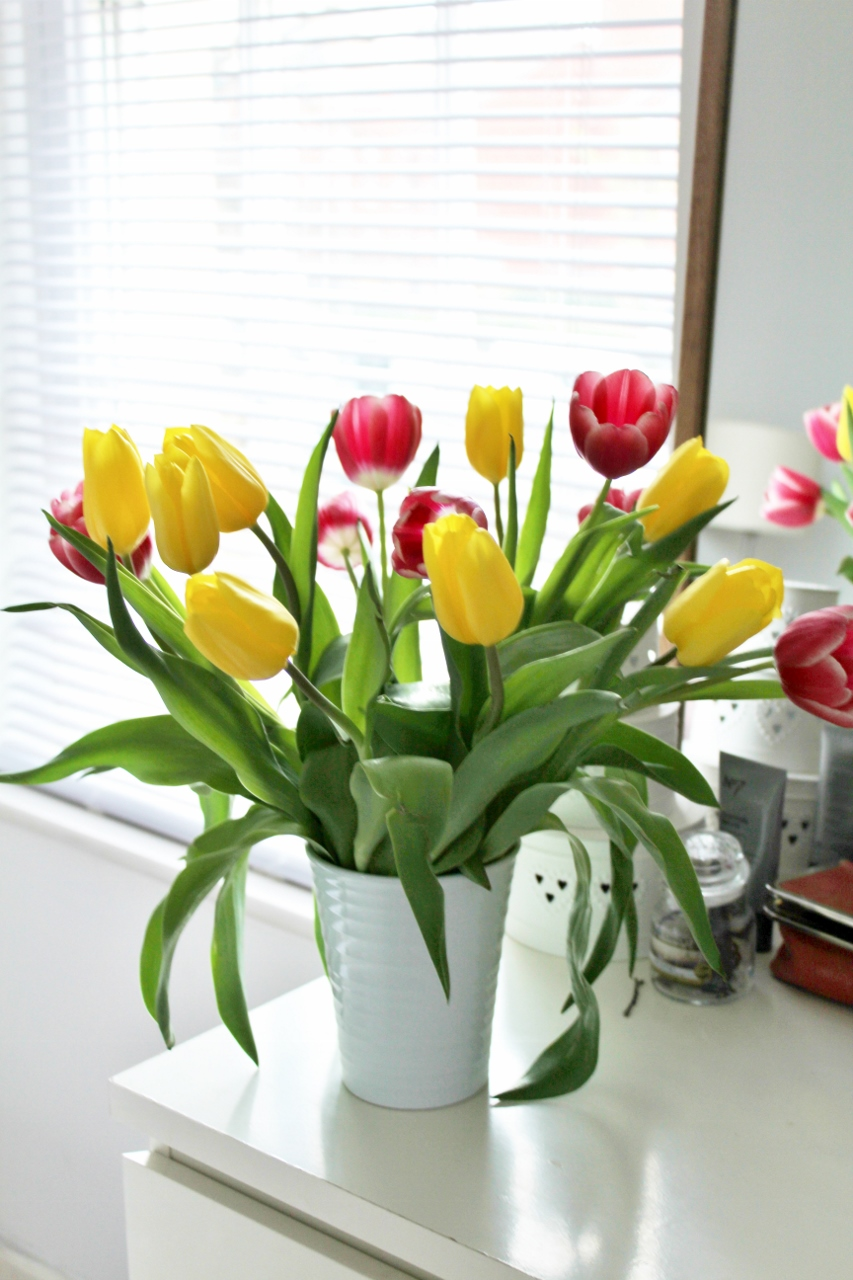 Little things I've loved tulips