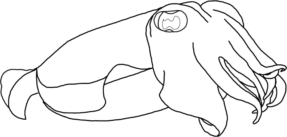 Cuttlefish coloring pages sketch coloring page for Cuttlefish coloring pages