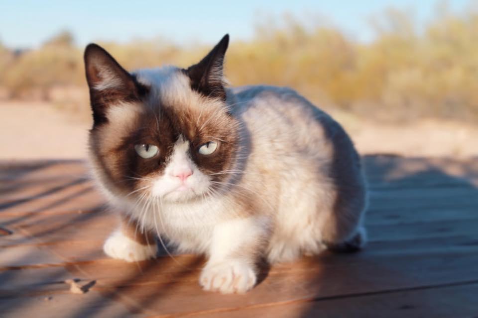 Kumpulan Gambar Kucing Lucu Dan Imut Mas Helmi Blog