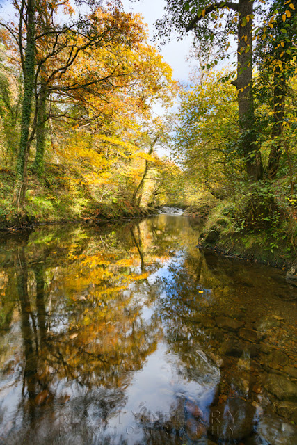 A tree in full autumn glow reflects on the Afon Mellte by Martyn Ferry Photography
