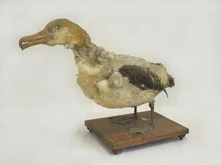http://museum-database.shimane-u.ac.jp/specimen/metadata/422