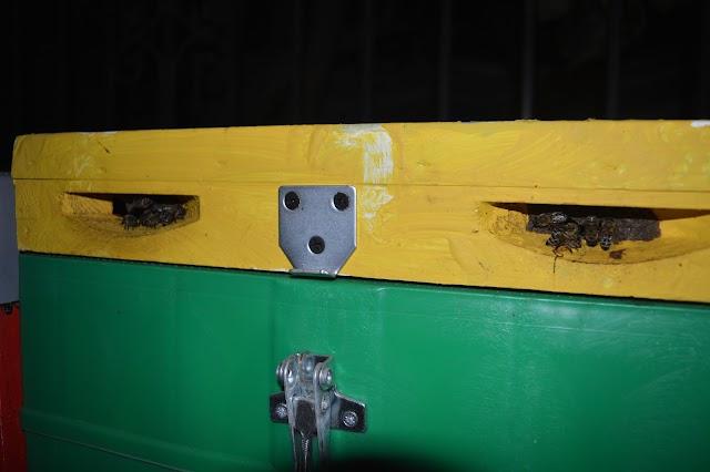 Πόσο μεγάλη είσοδο έχουν ανάγκη τα μελισσια! Ένα νέο πείραμα μας το αποδεικνύει