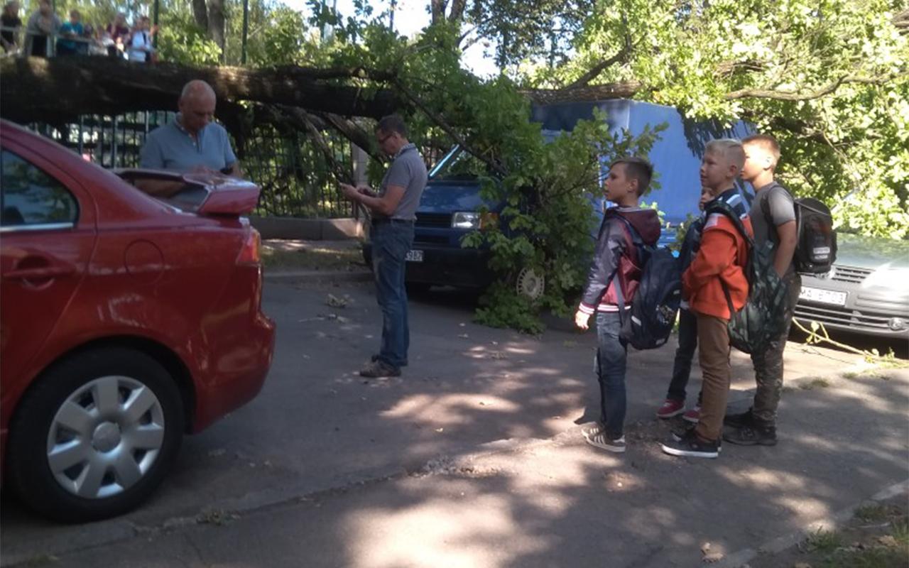 Koks uzkrīt uz mašīnām