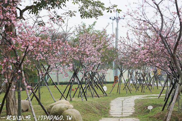 《台中.后里》2018中科崴立櫻花公園-數百棵粉紅色河津櫻花開,免費參觀
