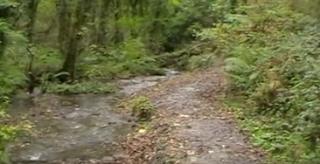 Rocky Valley stream