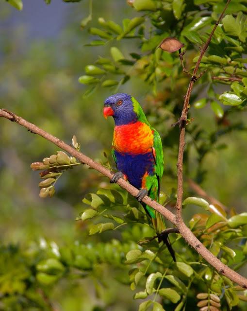 beautiful bird parrot