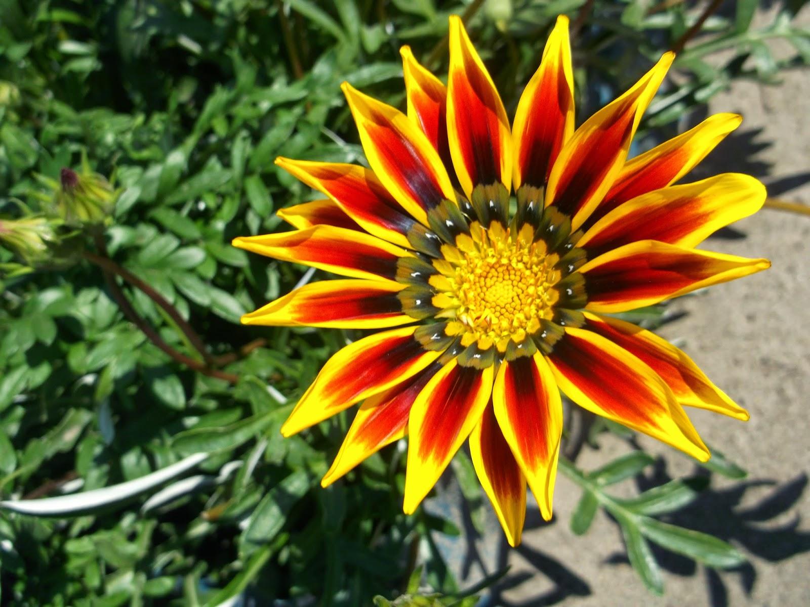смотреть фото садовых цветов с названием купить
