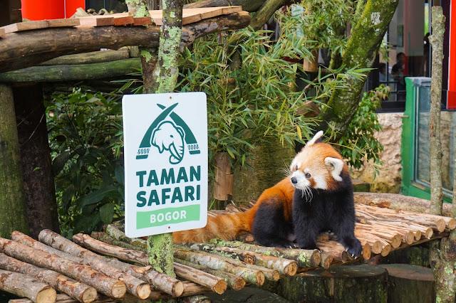Pertama Kali ke Taman Safari langsung lihat Panda