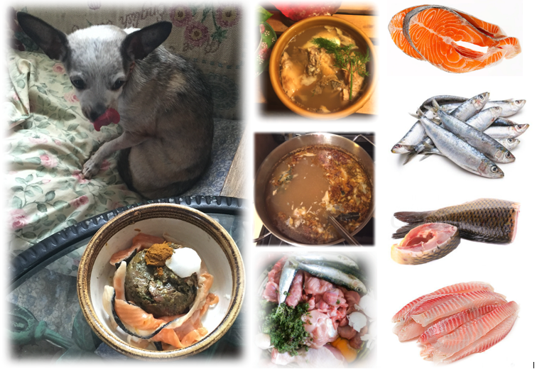 Ottawa valley dog whisperer fish for your dogs cats diet my dogs and cats enjoy raw fish and fish broth as part of a healthy raw whole fresh food diet if you currently use dry pet food feeding raw may forumfinder Image collections