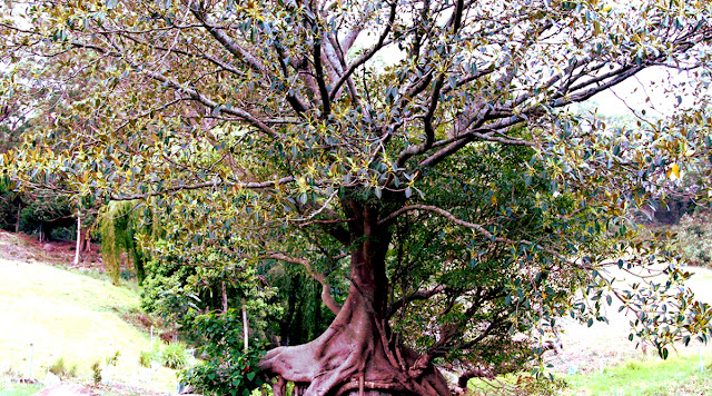 Dwarka, Sector 9 tree, Delhi