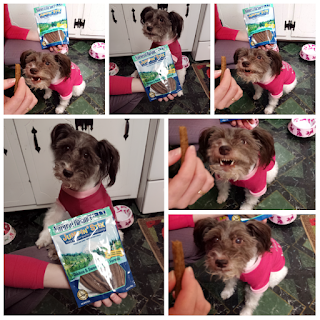 Photo collage showing several images of Pixel barking, howling, and smiling at her Mommy while asking for a Natural Balance Sweet Potato and Chicken flavored Jumping Stix treat