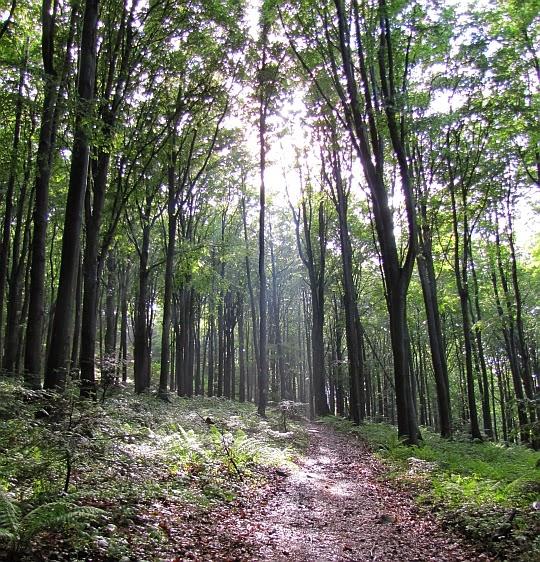 Zejście z Kamiennej Góry. Do wnętrza lasu wpadają promienie słoneczne.