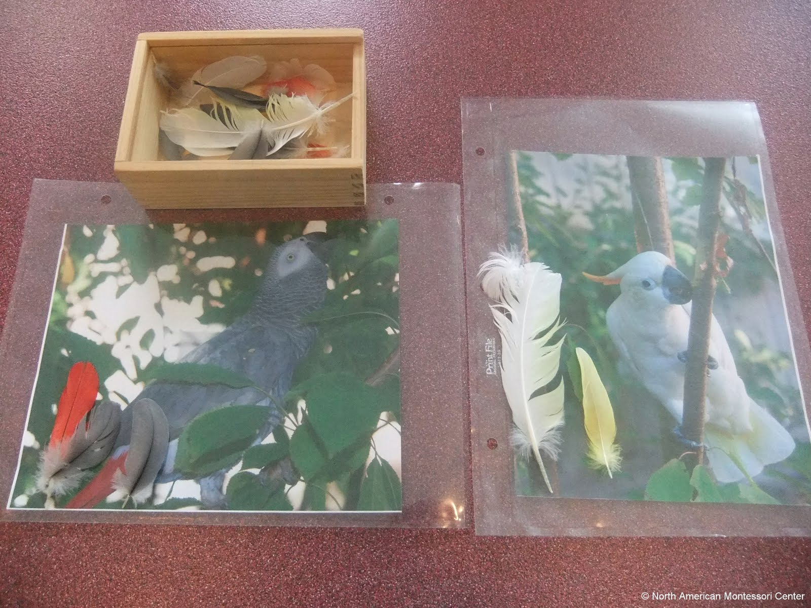 NAMC montessori preschool classroom studying birds feathers pictures