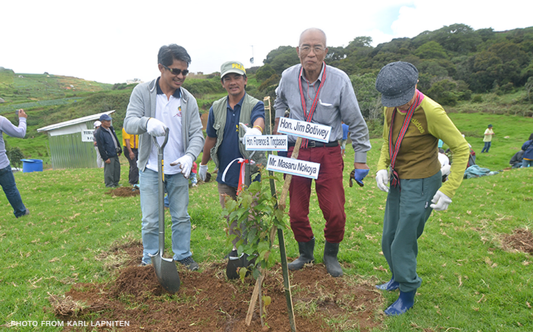 Cherry blossoms to bloom in Benguet