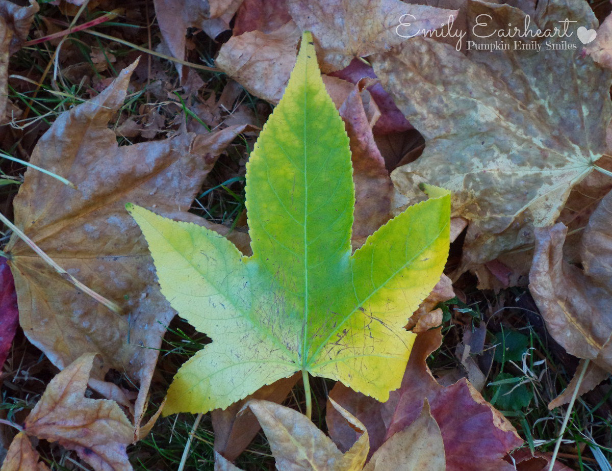 A green and yellow leaf surrounded by other leaves.