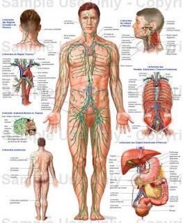 Sete abominações anatômicas