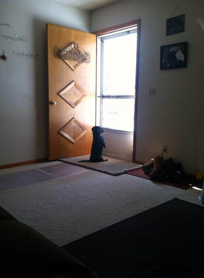 20 pets that are waiting owners home
