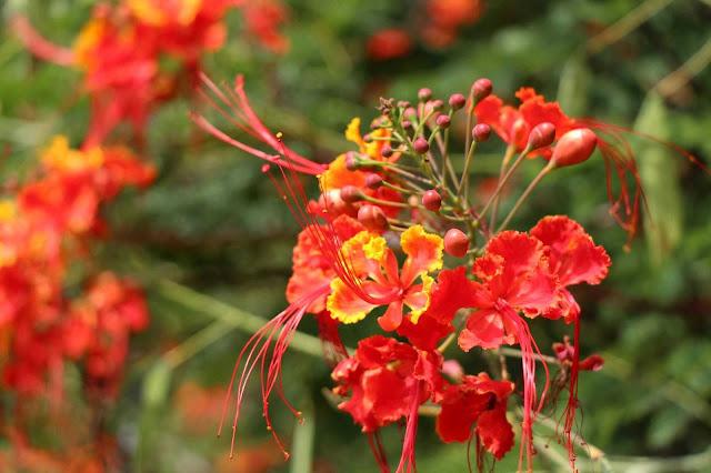a flower in the garden