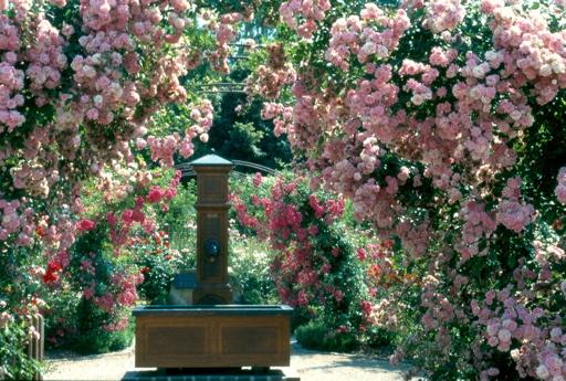 Tropical Garden In A Roses Garden