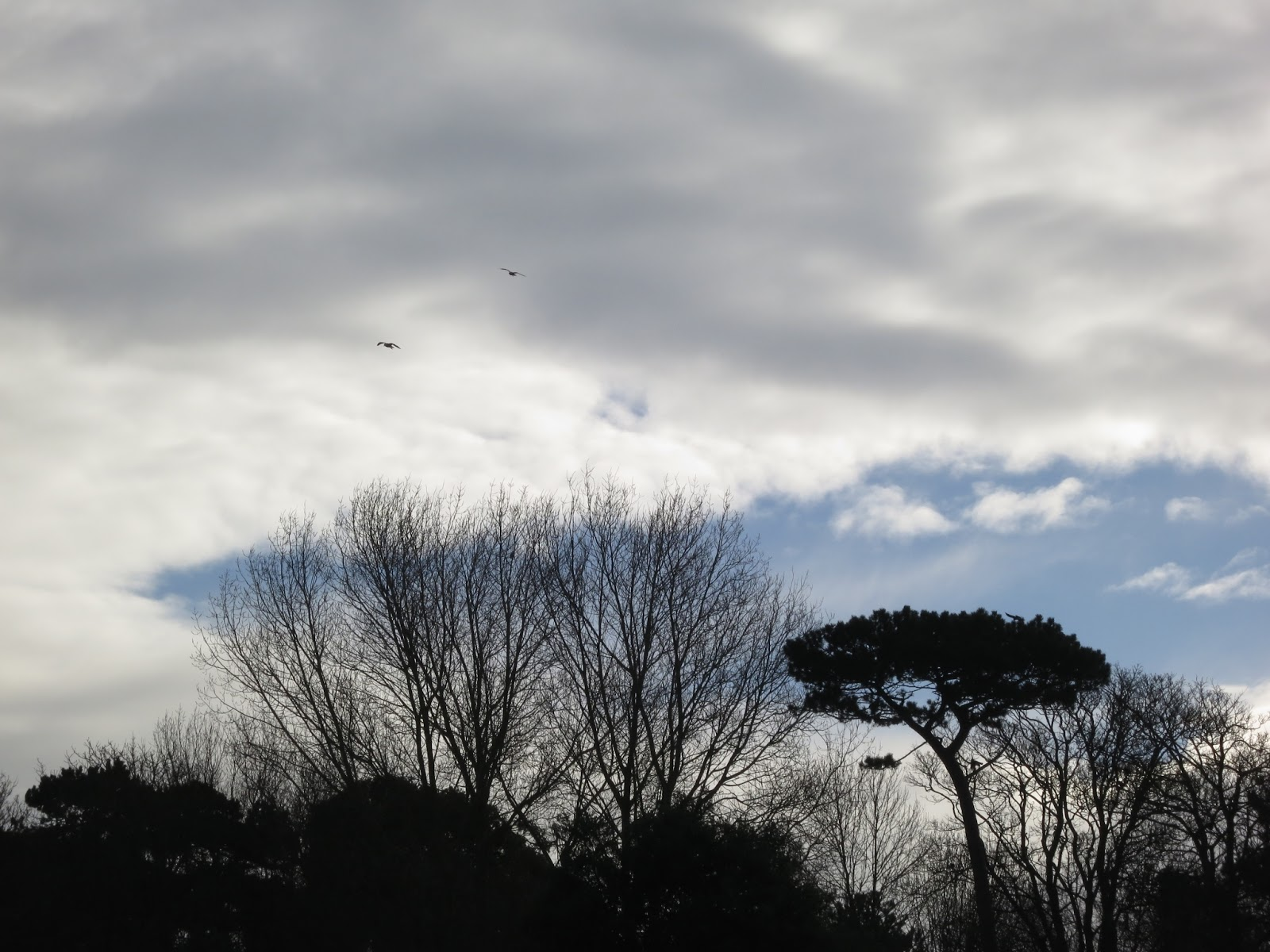 Birds fly over a variety of trees against a winter sky.