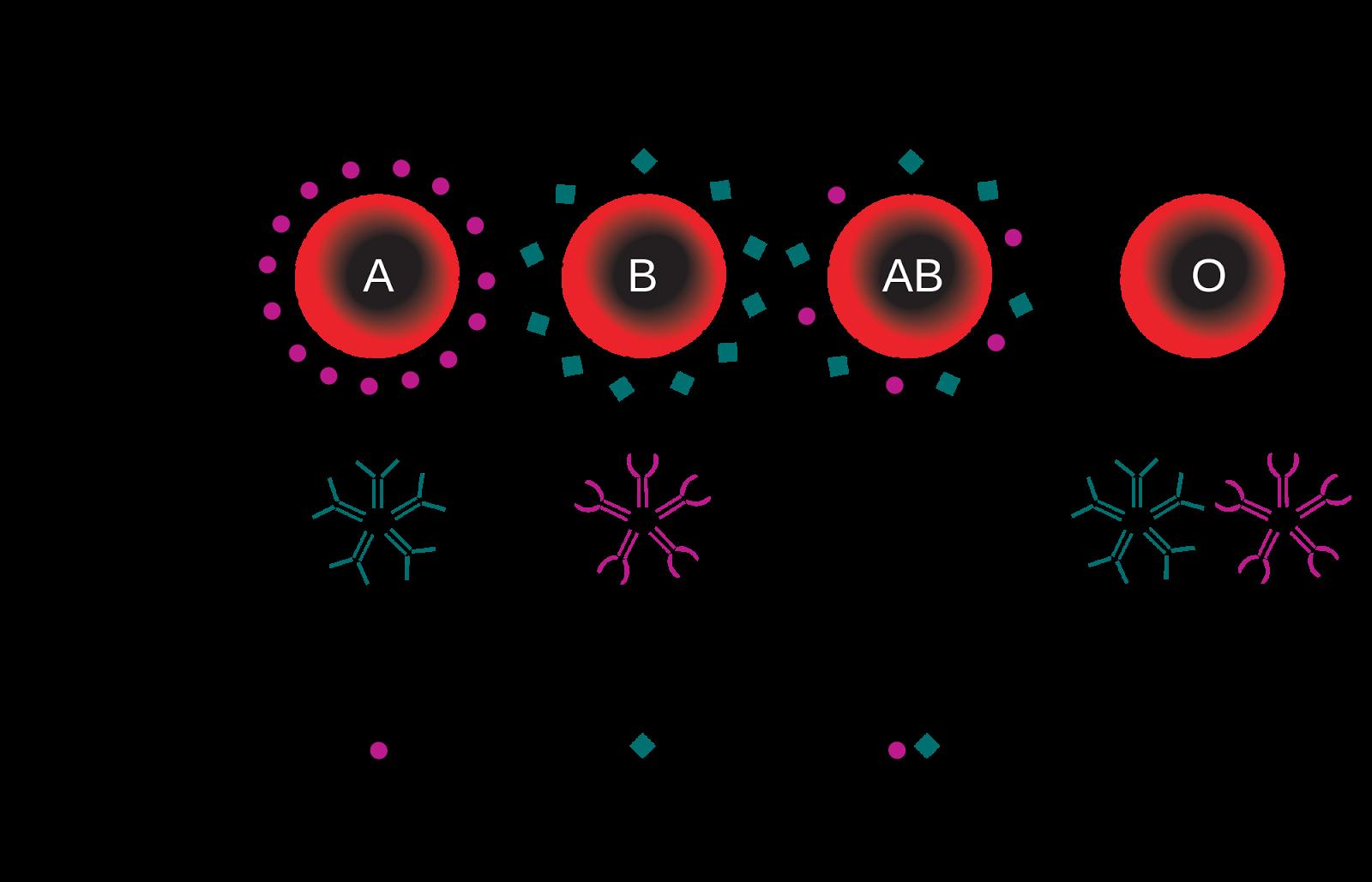 Pengertian Dan Sistem Abo Sistem Alel I Dan Sistem Rh Rhesus