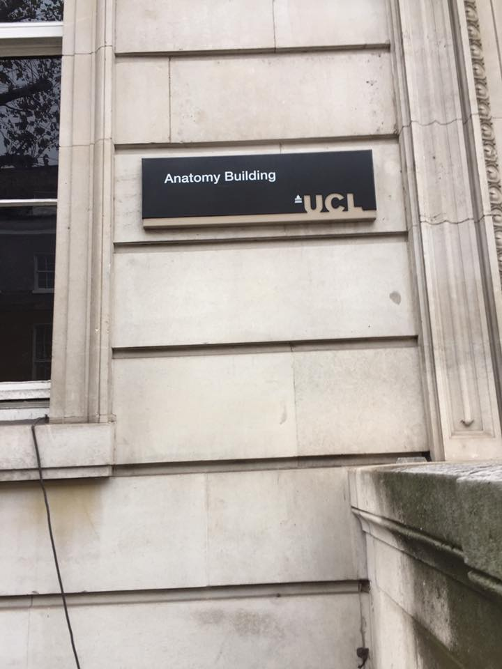 Famous Ucl Anatomy Building Mold Anatomy And Physiology Biology