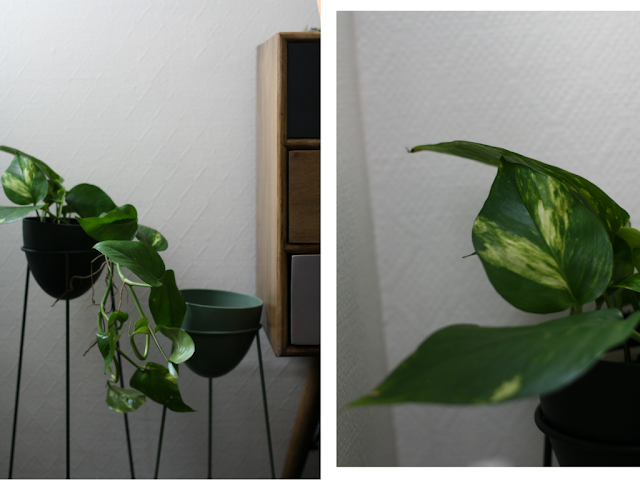 lifestyle plantes vertes a la maison