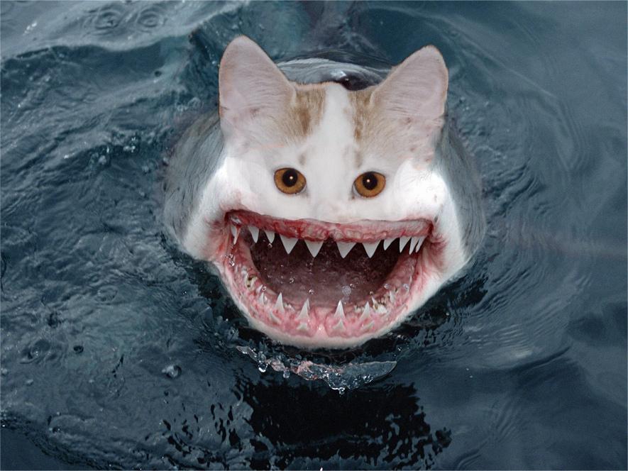 Картинки акул приколы, картинки ящерица