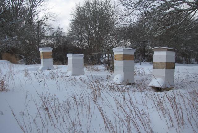 Προετοιμασία μελισσιών πριν το χειμώνα