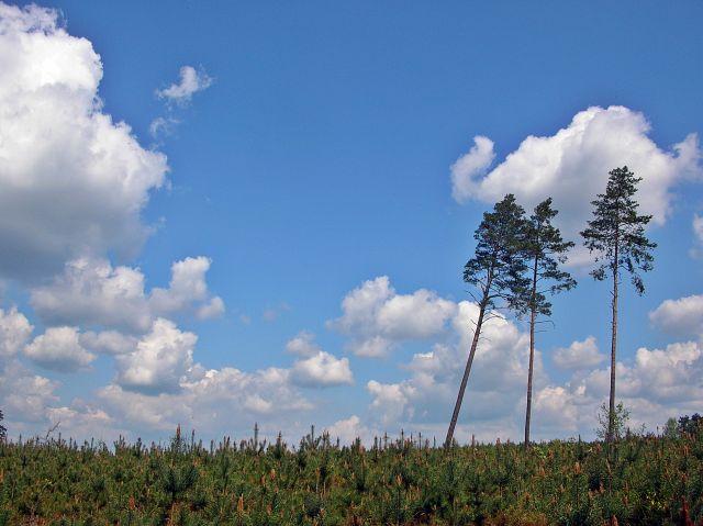 las koło Sulechowa