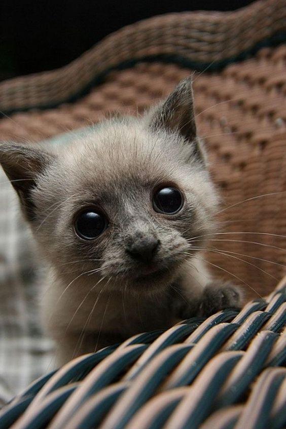 Cute Kitty Eyes