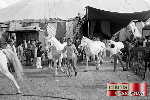 les chevaux sortent du chapiteau du Cirque National Suisse Knie  1970