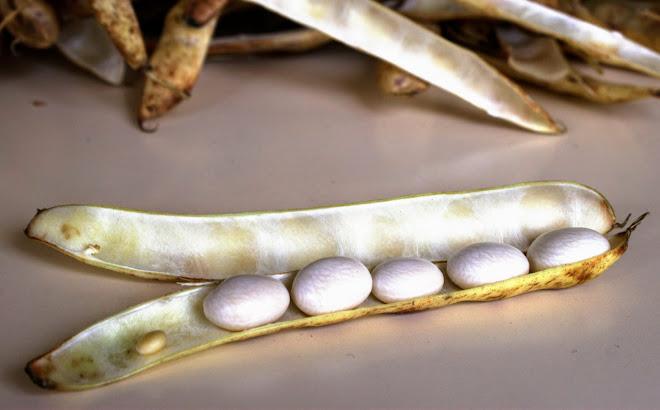 Haricots secs au beurre : cocos, lingots, flageolets