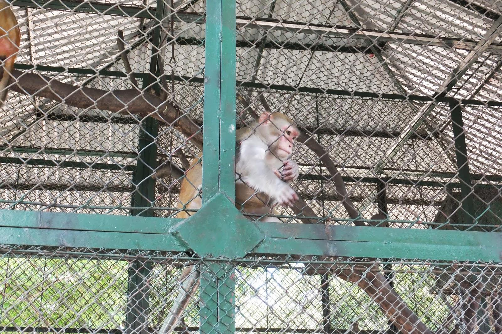 hanoi-zoo-monkey ハノイ動物園の猿3
