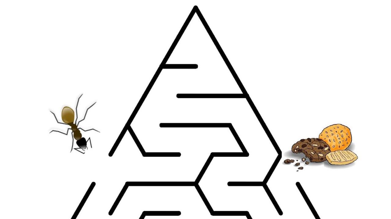 Mencari Jejak Bantulah Semut Menemukan Kue