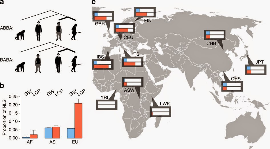 Did Europeans get fat from Neanderthals?