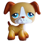 Littlest Pet Shop Portable Pets Boxer (#218) Pet