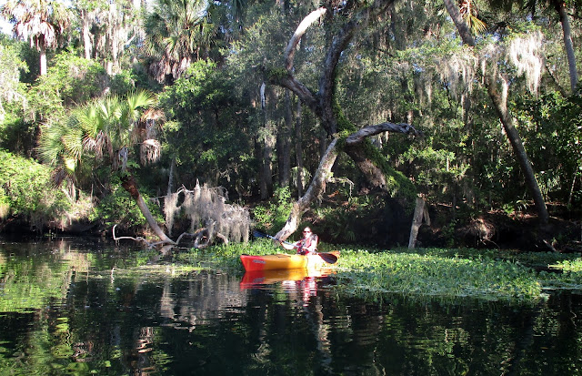 Nothing like a guided kayak tour with Central Florida Nature Adventures, llc to celebrate Independence Day 2017