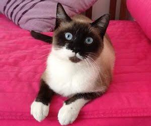 gato deus
