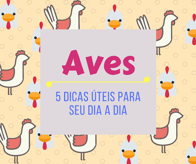 5 Dicas - Aves