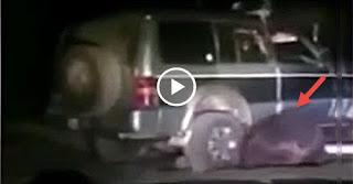 Πάτησε Αρκούδα με το 4x4 - Η Συνέχεια, Απρόβλεπτη! Video