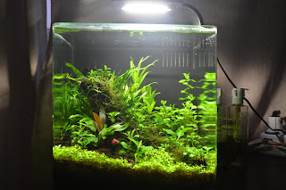 An Easy Guide Into Assembling A Nano Nature Aquarium Cube
