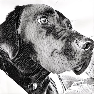 Using the prisma app I converted a photo of Leif my guide dog into a reasonable drawing.