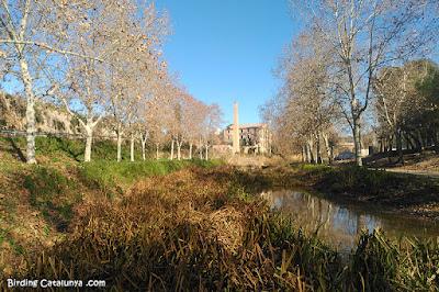 Riu Gaià - Catllar