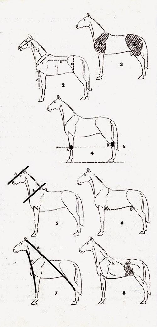 Cara Menggambar Kuda : menggambar, Belajar, Melukis, Lukisan, Naturalisme:, Bagus, Menggambar