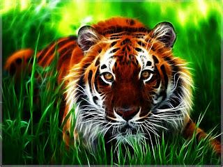 خلفيات وصور النمور 2017 Wallpaper Tiger HD
